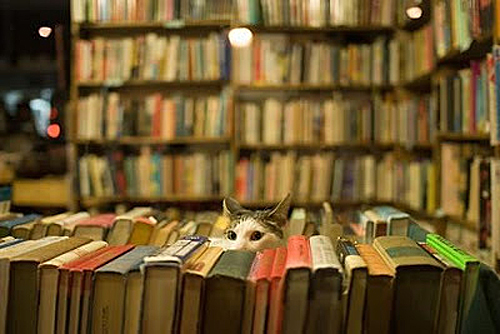 cats-in-books-1_zpsf0cbaf49